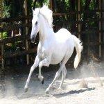 Rüyada beyaz atlar görmek