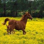 Rüyada at kovalaması