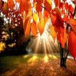 Rüyada sonbahar görmek