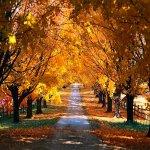 Rüyada sarı yapraklar görmek
